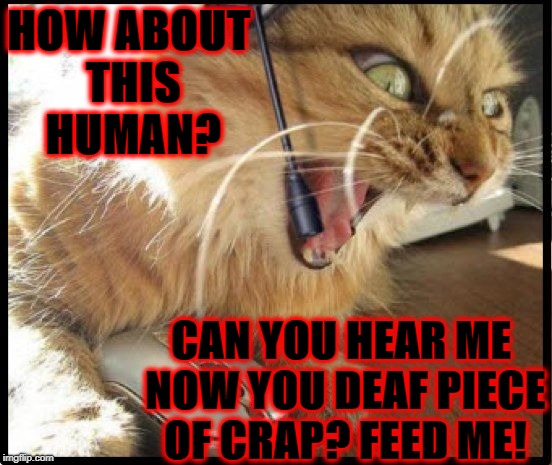 HOW ABOUT THIS HUMAN? CAN YOU HEAR ME NOW YOU DEAF PIECE OF CRAP? FEED ME! | image tagged in enraged kitty | made w/ Imgflip meme maker