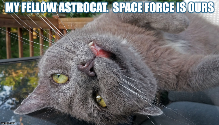 Faded Cat | MY FELLOW ASTROCAT.  SPACE FORCE IS OURS | image tagged in faded cat | made w/ Imgflip meme maker