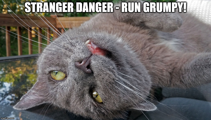 Faded Cat | STRANGER DANGER - RUN GRUMPY! | image tagged in faded cat | made w/ Imgflip meme maker
