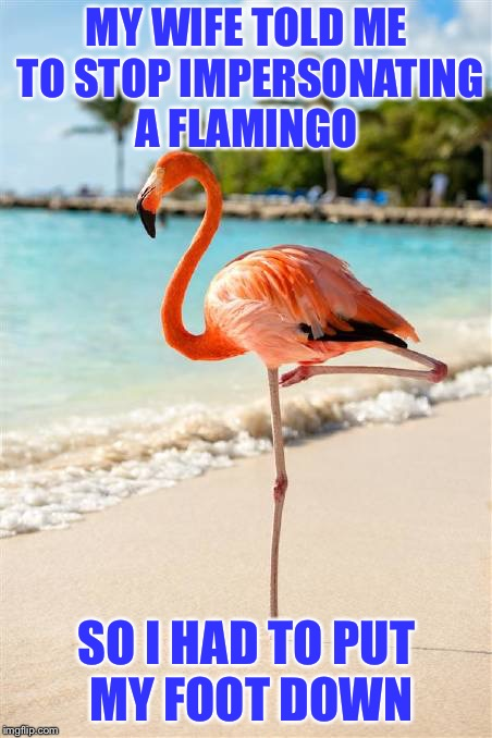 Put my foot down | MY WIFE TOLD ME TO STOP IMPERSONATING A FLAMINGO SO I HAD TO PUT MY FOOT DOWN | image tagged in flamingo,funny,wife | made w/ Imgflip meme maker