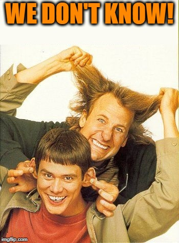 DUMB and dumber | WE DON'T KNOW! | image tagged in dumb and dumber | made w/ Imgflip meme maker