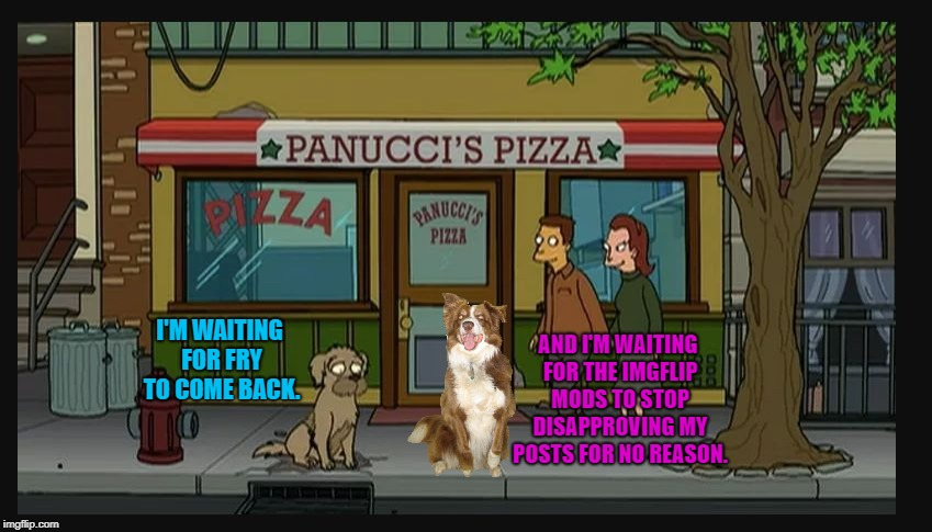 Futurama dog | I'M WAITING FOR FRY TO COME BACK. AND I'M WAITING FOR THE IMGFLIP MODS TO STOP DISAPPROVING MY POSTS FOR NO REASON. | image tagged in futurama seymour,fry,chili the border collie,dogs,border collie,border terrier | made w/ Imgflip meme maker