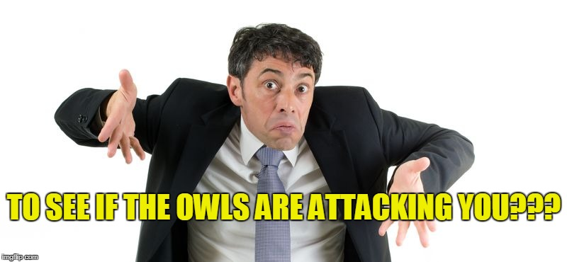 TO SEE IF THE OWLS ARE ATTACKING YOU??? | made w/ Imgflip meme maker