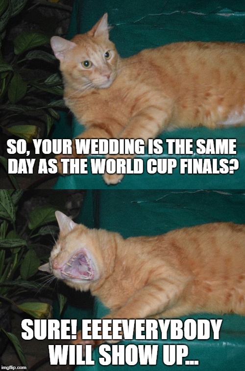 LMAO Cat | SO, YOUR WEDDING IS THE SAME DAY AS THE WORLD CUP FINALS? SURE! EEEEVERYBODY WILL SHOW UP... | image tagged in laughing cat,cat,laugh,laughter,laughing,cats | made w/ Imgflip meme maker