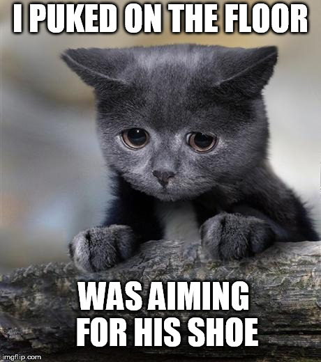Confession Cat | I PUKED ON THE FLOOR WAS AIMING FOR HIS SHOE | image tagged in confession cat,AdviceAnimals | made w/ Imgflip meme maker