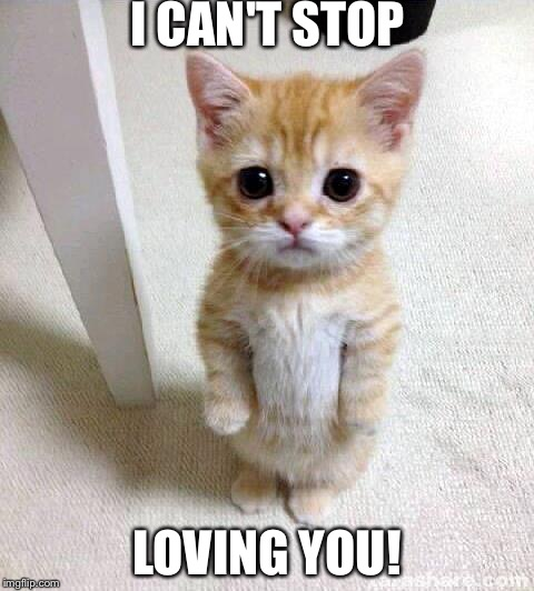 Cute Cat Meme | I CAN'T STOP LOVING YOU! | image tagged in memes,cute cat | made w/ Imgflip meme maker