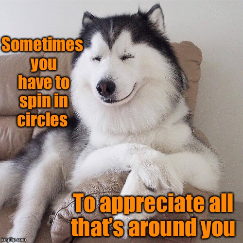 Sometimes you have to spin in circles To appreciate all that's around you | image tagged in funny dogs,memes,funny meme,raydog,dog,wisdom | made w/ Imgflip meme maker