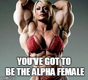 YOU'VE GOT TO BE THE ALPHA FEMALE | made w/ Imgflip meme maker