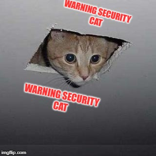 Ceiling Cat | WARNING SECURITY CAT WARNING SECURITY CAT | image tagged in memes,ceiling cat | made w/ Imgflip meme maker