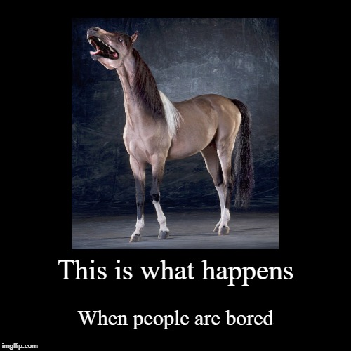 Sometimes I wonder why the human race is still alive | This is what happens | When people are bored | image tagged in funny,demotivationals,horse,riding,dog,photoshop | made w/ Imgflip demotivational maker
