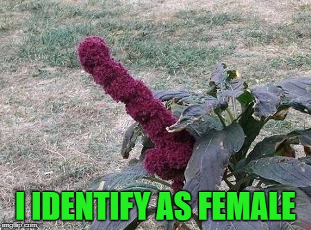 I IDENTIFY AS FEMALE | made w/ Imgflip meme maker