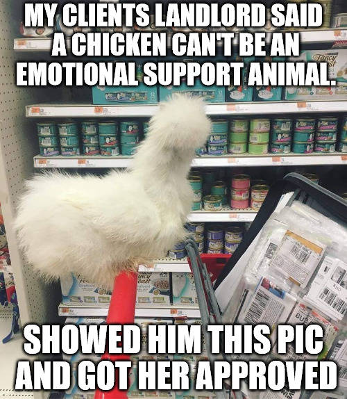 Chicken | MY CLIENTS LANDLORD SAID A CHICKEN CAN'T BE AN EMOTIONAL SUPPORT ANIMAL. SHOWED HIM THIS PIC AND GOT HER APPROVED | image tagged in chicken,coupons,grocery | made w/ Imgflip meme maker
