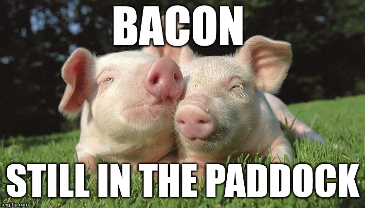 BACON STILL IN THE PADDOCK | made w/ Imgflip meme maker
