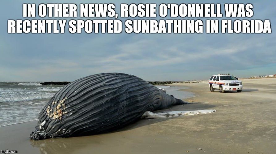 IN OTHER NEWS, ROSIE O'DONNELL WAS RECENTLY SPOTTED SUNBATHING IN FLORIDA | image tagged in rosie o'donnell | made w/ Imgflip meme maker