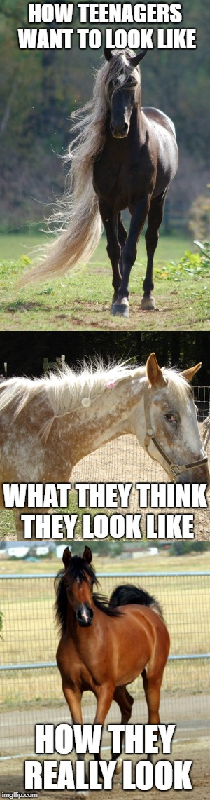 People Are Just Like Horses | HOW TEENAGERS WANT TO LOOK LIKE WHAT THEY THINK THEY LOOK LIKE HOW THEY REALLY LOOK | image tagged in horse,horses,teenagers,memes,funny | made w/ Imgflip meme maker