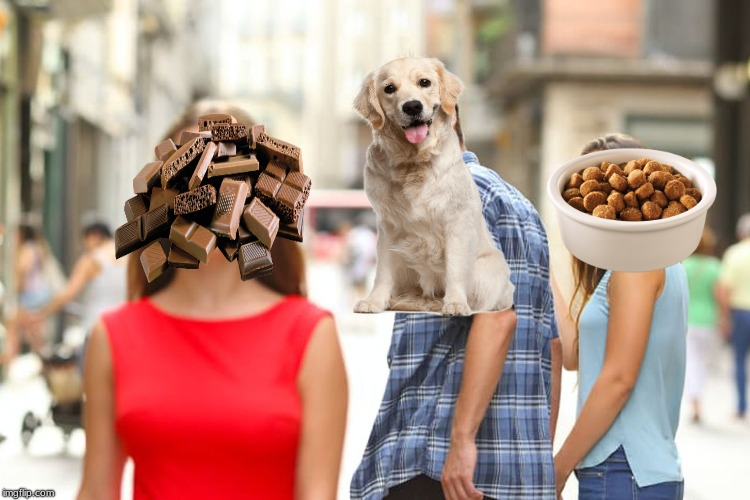 My dog explained with a meme | image tagged in memes,distracted boyfriend | made w/ Imgflip meme maker