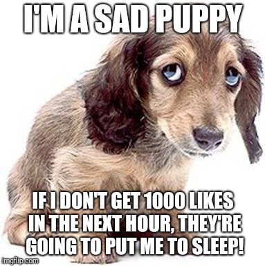 Sad puppy | I'M A SAD PUPPY IF I DON'T GET 1000 LIKES IN THE NEXT HOUR, THEY'RE GOING TO PUT ME TO SLEEP! | image tagged in sad puppy | made w/ Imgflip meme maker