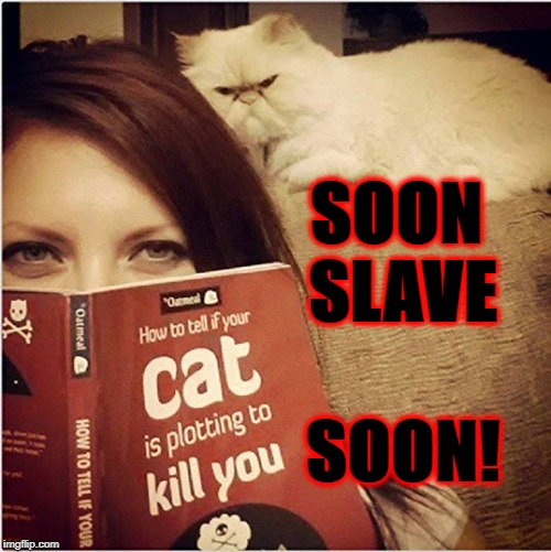 SOON SLAVE SOON! | image tagged in soon slave | made w/ Imgflip meme maker