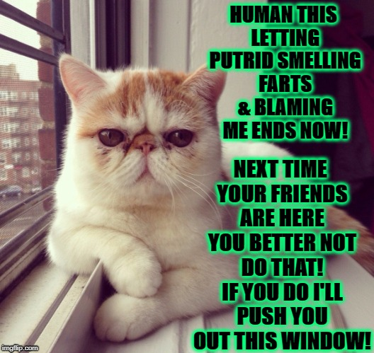 PUTRID FARTS | HUMAN THIS LETTING PUTRID SMELLING FARTS & BLAMING ME ENDS NOW! NEXT TIME YOUR FRIENDS ARE HERE YOU BETTER NOT DO THAT! IF YOU DO I'LL PUSH  | image tagged in cats | made w/ Imgflip meme maker