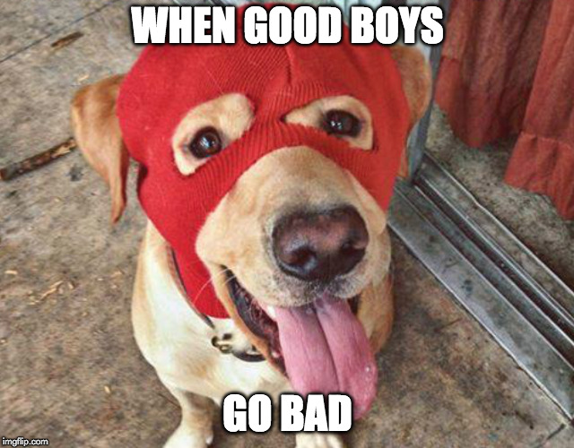 Bet he had a ruff life. | WHEN GOOD BOYS GO BAD | image tagged in bad pun dog,dog,bad guy,bank robber | made w/ Imgflip meme maker