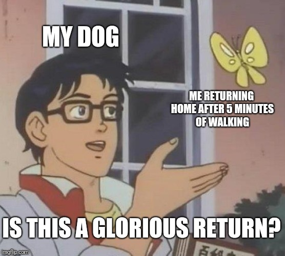So this is a template now huh | MY DOG ME RETURNING HOME AFTER 5 MINUTES OF WALKING IS THIS A GLORIOUS RETURN? | image tagged in memes,is this a pigeon | made w/ Imgflip meme maker