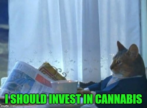 I Should Buy A Boat Cat Meme | I SHOULD INVEST IN CANNABIS | image tagged in memes,i should buy a boat cat,cannabis,money,what if i told you | made w/ Imgflip meme maker