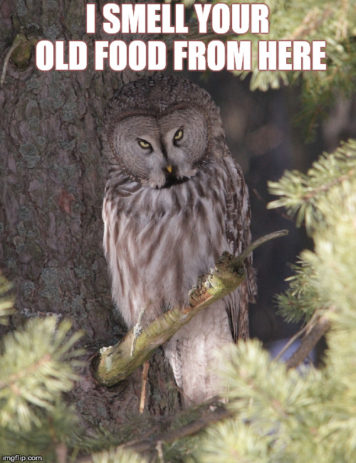 I SMELL YOUR OLD FOOD FROM HERE | made w/ Imgflip meme maker