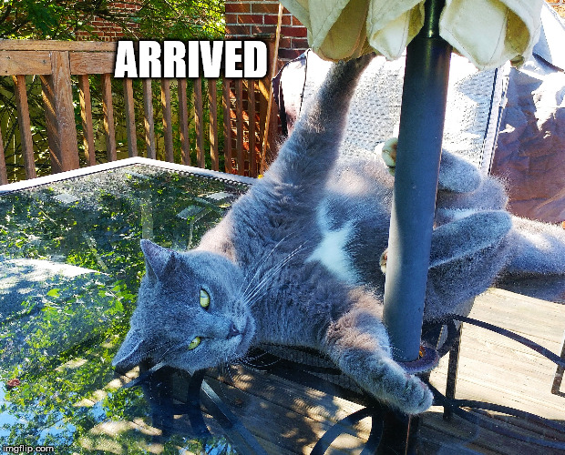 Pole dancing cat | ARRIVED | image tagged in pole dancing cat | made w/ Imgflip meme maker