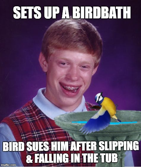 Backyard Bad Luck | SETS UP A BIRDBATH BIRD SUES HIM AFTER SLIPPING & FALLING IN THE TUB | image tagged in funny memes,bad luck brian,birds,birdwatching | made w/ Imgflip meme maker