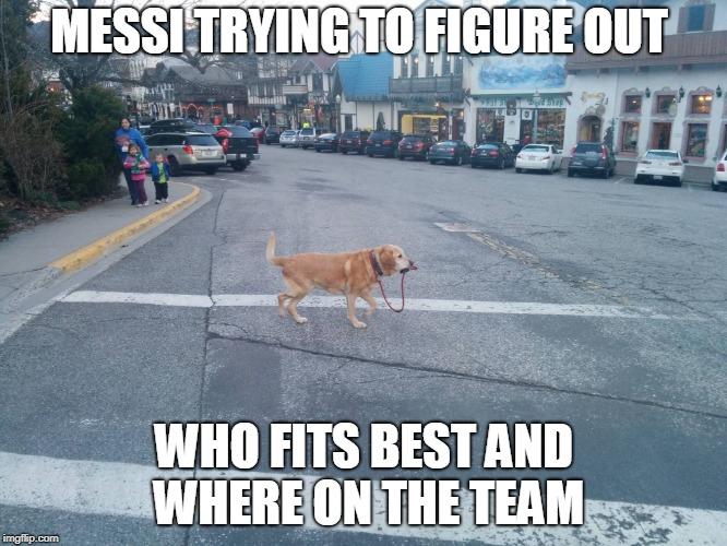 dog walking itself
