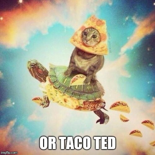 Space Pizza Cat Turtle Tacos | OR TACO TED | image tagged in space pizza cat turtle tacos | made w/ Imgflip meme maker