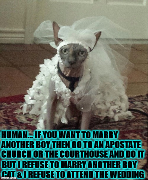 HUMAN... IF YOU WANT TO MARRY ANOTHER BOY THEN GO TO AN APOSTATE CHURCH OR THE COURTHOUSE AND DO IT BUT I REFUSE TO MARRY ANOTHER BOY CAT &  | image tagged in i'm a boy stupid | made w/ Imgflip meme maker