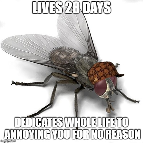 Scumbag House Fly | LIVES 28 DAYS DEDICATES WHOLE LIFE TO ANNOYING YOU FOR NO REASON | image tagged in scumbag house fly,scumbag | made w/ Imgflip meme maker