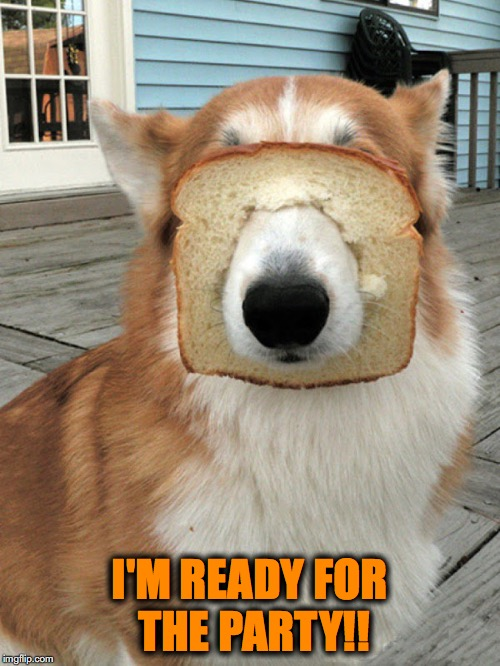 breakfast doggo | I'M READY FOR THE PARTY!! | image tagged in breakfast doggo | made w/ Imgflip meme maker
