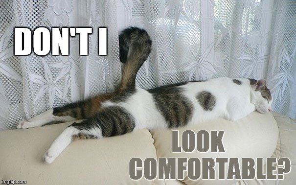The Life Of A Cat | DON'T I LOOK     COMFORTABLE? | image tagged in memes,cat,sleeping,tail,looks,so cute | made w/ Imgflip meme maker