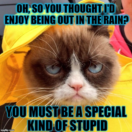 Out in the rain | OH, SO YOU THOUGHT I'D ENJOY BEING OUT IN THE RAIN? YOU MUST BE A SPECIAL KIND OF STUPID | image tagged in funny memes,grumpy cat,caturday,rain | made w/ Imgflip meme maker