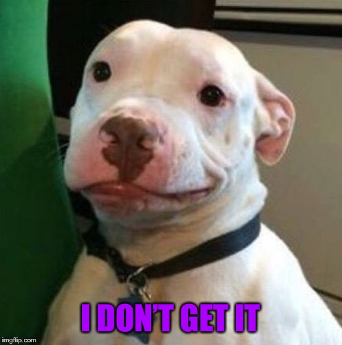 Awkward Dog | I DON'T GET IT | image tagged in awkward dog | made w/ Imgflip meme maker