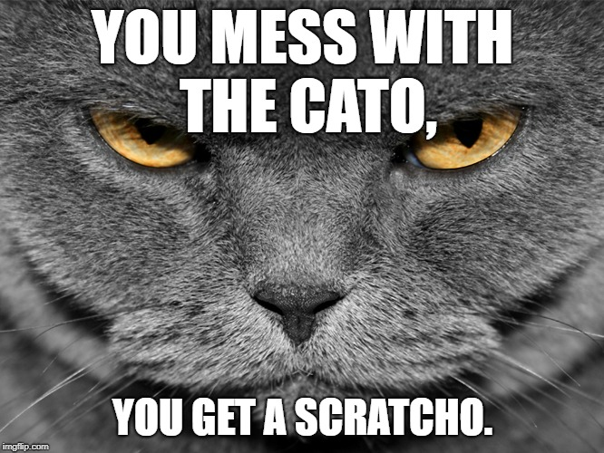 YOU MESS WITH THE CATO, YOU GET A SCRATCHO. | image tagged in angry cat | made w/ Imgflip meme maker