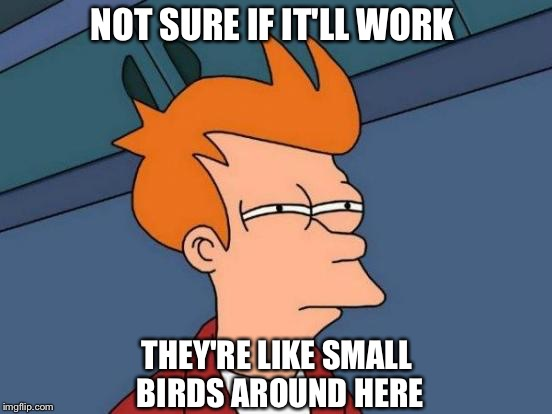 Futurama Fry Meme | NOT SURE IF IT'LL WORK THEY'RE LIKE SMALL BIRDS AROUND HERE | image tagged in memes,futurama fry | made w/ Imgflip meme maker
