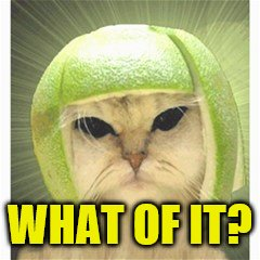 melon cat | WHAT OF IT? | image tagged in melon cat | made w/ Imgflip meme maker