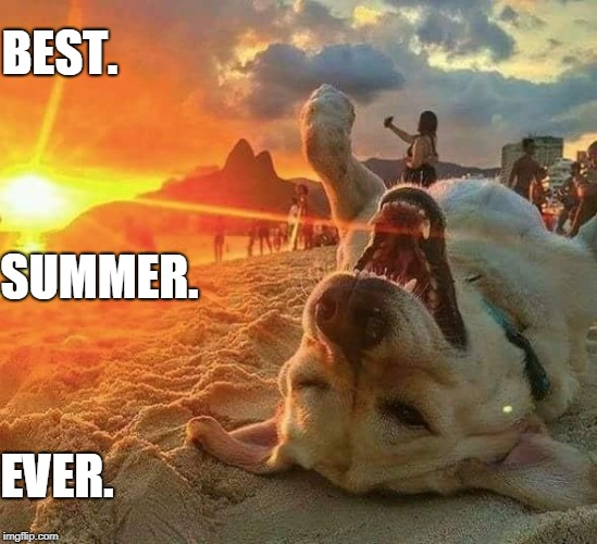 This dog's livin' the dream | BEST. SUMMER. EVER. | image tagged in best,summer,ever,dog | made w/ Imgflip meme maker