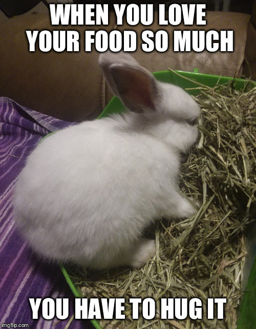 Rest in peace, Petra. 2018-2018, died by stroke. | WHEN YOU LOVE YOUR FOOD SO MUCH YOU HAVE TO HUG IT | image tagged in bunny,rabbit,animals,cute,adorable,food | made w/ Imgflip meme maker