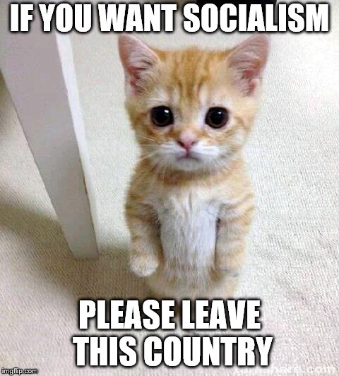 Cute Cat Meme | IF YOU WANT SOCIALISM PLEASE LEAVE THIS COUNTRY | image tagged in memes,cute cat | made w/ Imgflip meme maker