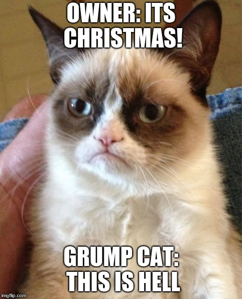 NO GOD NO! | OWNER: ITS CHRISTMAS! GRUMP CAT: THIS IS HELL | image tagged in memes,grumpy cat,christmas,hell | made w/ Imgflip meme maker