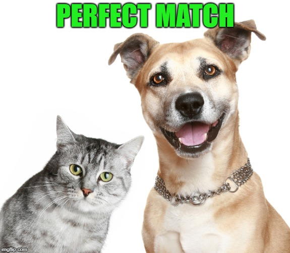 PERFECT MATCH | made w/ Imgflip meme maker