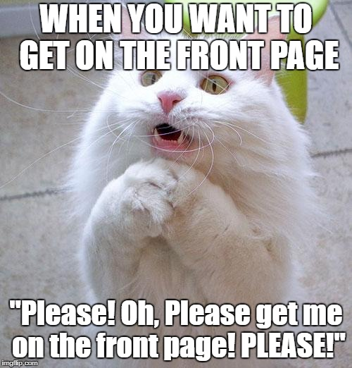 "Begging Cat | WHEN YOU WANT TO GET ON THE FRONT PAGE ""Please! Oh, Please get me on the front page! PLEASE!"" 