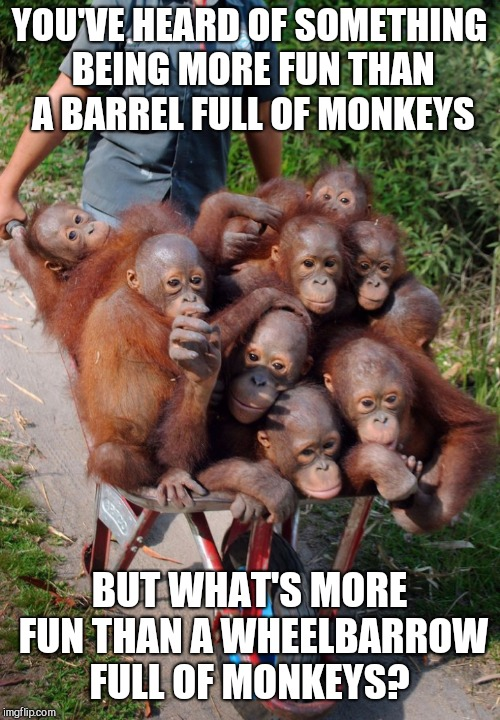 More fun that a wheelbarrow full of monkeys  | YOU'VE HEARD OF SOMETHING BEING MORE FUN THAN A BARREL FULL OF MONKEYS BUT WHAT'S MORE FUN THAN A WHEELBARROW FULL OF MONKEYS? | image tagged in jbmemegeek,monkeys,funny animals | made w/ Imgflip meme maker