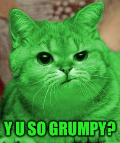 RayCat Annoyed | Y U SO GRUMPY? | image tagged in raycat annoyed | made w/ Imgflip meme maker