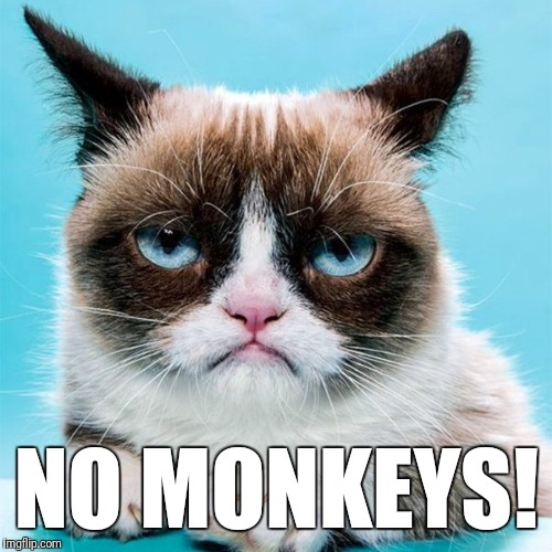 NO MONKEYS! | made w/ Imgflip meme maker