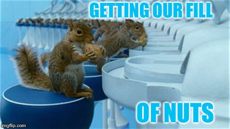 GETTING OUR FILL OF NUTS | made w/ Imgflip meme maker